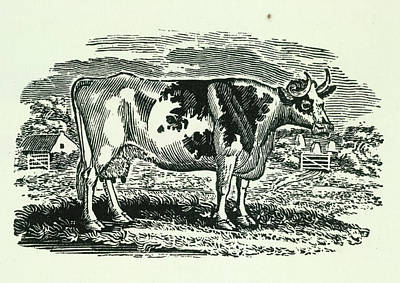 Cow Poster by British Library