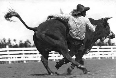 Cowboy Falling  From Bull Poster by Underwood Archives