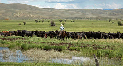 Cowboy Herding On A Cattle Ranch Poster by Jim West