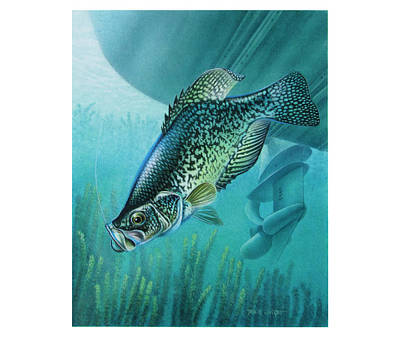 Crappie And Boat Poster by JQ Licensing
