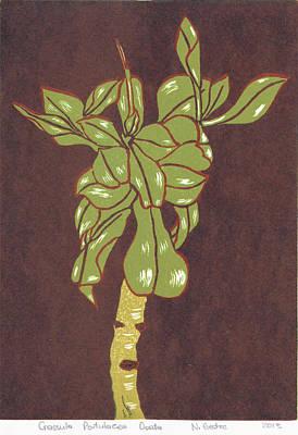 Crassula Portulacea Quata Poster by N Gedze