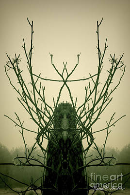 Creature Of The Wood Poster by David Gordon