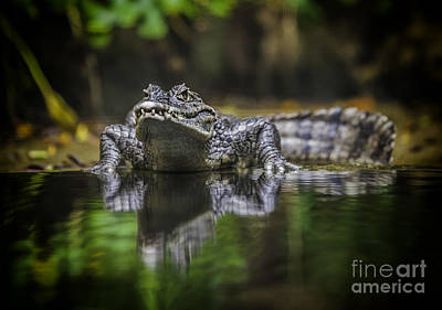 Crocodile Poster by Anek Suwannaphoom