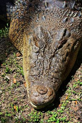 Crocodile Tears  Poster by Chuck  Hicks