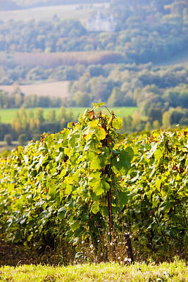 Crops In A Vineyard, Chigny-les-roses Poster by Panoramic Images