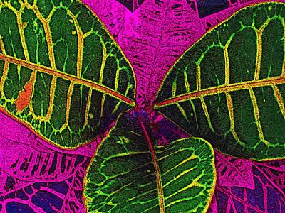 Croton Art 6146 Poster by Steve Lipson