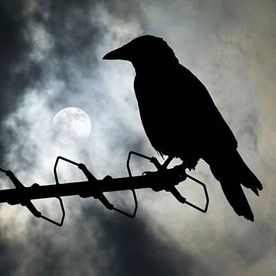 Crow Against A Moonlit Sky Poster by Detlev Van Ravenswaay