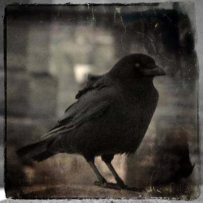Crow Portrait Poster by Gothicolors Donna Snyder