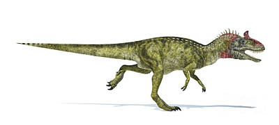 Cryolophosaurus Dinosaur On White Poster by Leonello Calvetti
