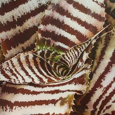 Cryptanthus Poster by Urszula Dudek