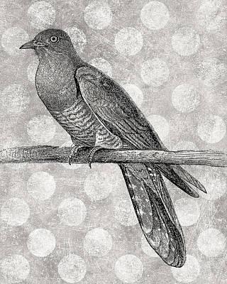 Cuckoo Bird Antique Modern Poster by Flo Karp