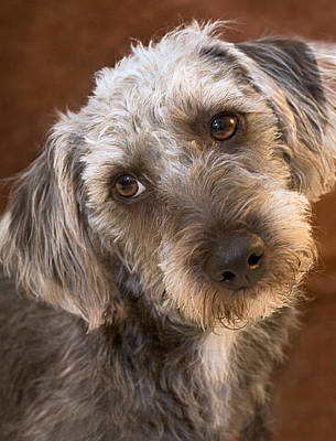 Cute Pup Poster by Natalie Kinnear