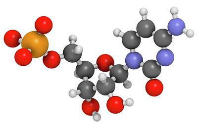 Cytidine Monophosphate Molecule Poster by Molekuul