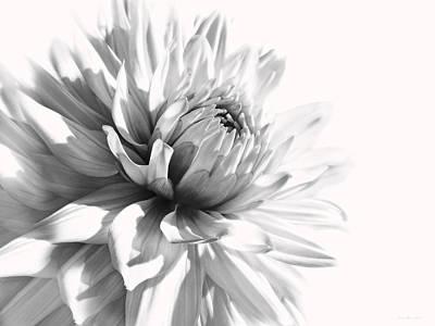 Dahlia Flower In Monochrome Poster by Jennie Marie Schell