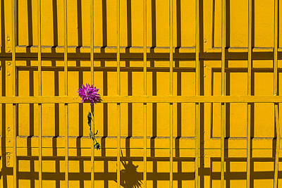 Dahlia In Yellow Gate Poster by Garry Gay