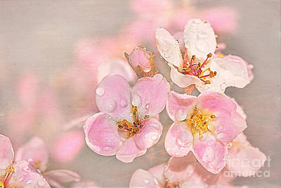 Dainty Blossoms Of Spring 2 Poster by Kaye Menner