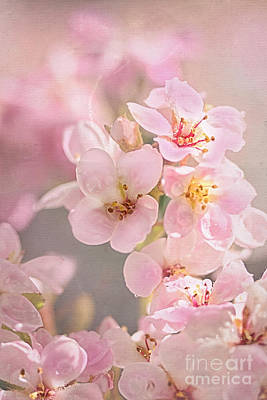 Dainty Blossoms Of Spring Poster by Kaye Menner