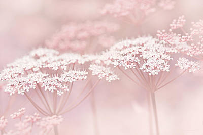 Dainty White Flowers Pink Poster by Jennie Marie Schell