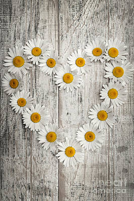 Daisy Heart On Old Wood Poster by Elena Elisseeva