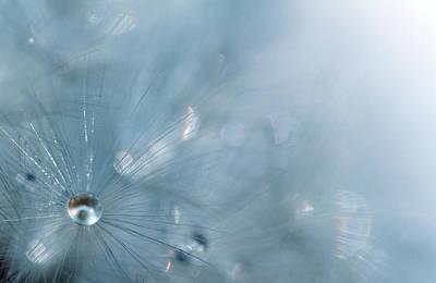 Dandelion - Luminosity Poster by Rebecca Cozart