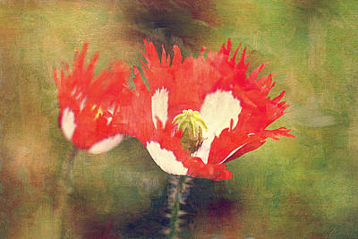 Danish Flag Poppies Poster by Maria Angelica Maira