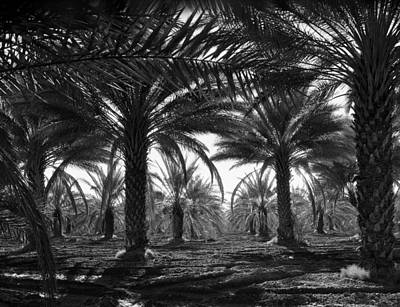 Date Palms Poster by Georgia Fowler
