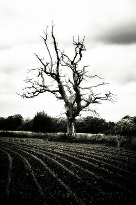 Dead Tree Poster by Joana Kruse