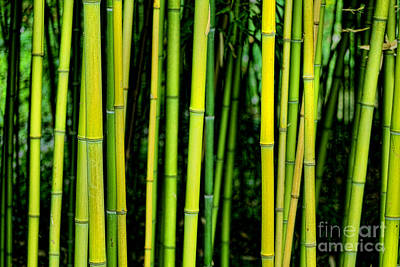 Deep Bamboo Poster by Olivier Le Queinec