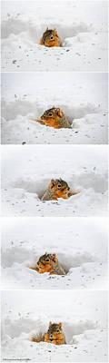 Deep Snow Squirrel Series Poster by LeeAnn McLaneGoetz McLaneGoetzStudioLLCcom