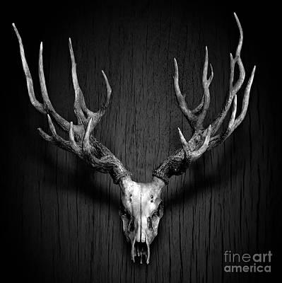Deer Antler Hang On Wood Panel Poster by Nuttakit Sukjaroensuk