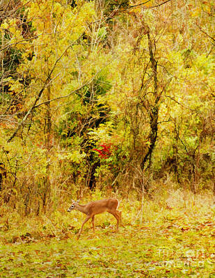 Deer Autumn Poster by Darren Fisher