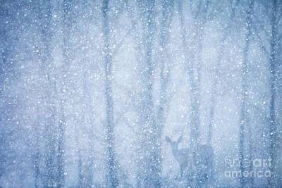 Deer In A Snowy Forest Poster by Diane Diederich