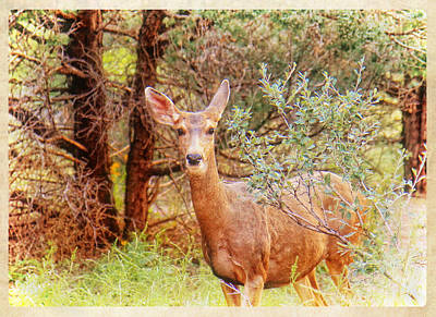 Deer In Forest Poster by Donna Haggerty