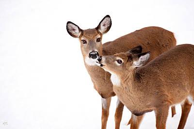 Deer Kisses Poster by Karol Livote