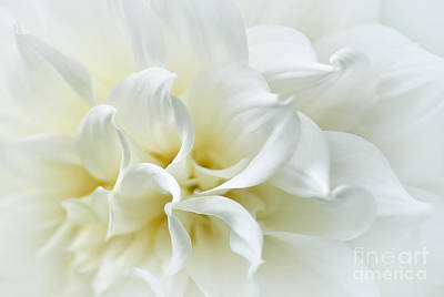 Delicate White Softness Poster by Kaye Menner