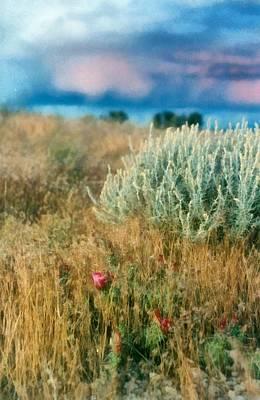 Desert Flowers Poster by Michelle Calkins