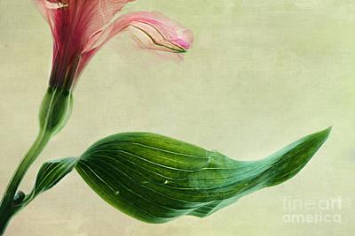 dim colours II Poster by Priska Wettstein
