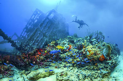 Diver At The Wreck Poster by Debra and Dave Vanderlaan