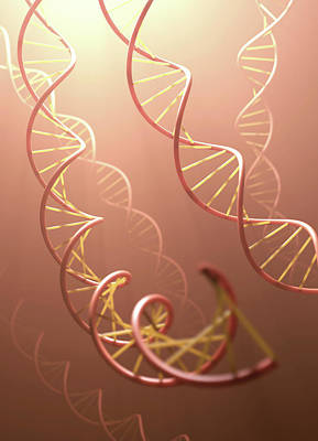 Dna Structure Poster by Ktsdesign