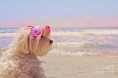 Dog Days Of Summer Poster by Andrea Auletta