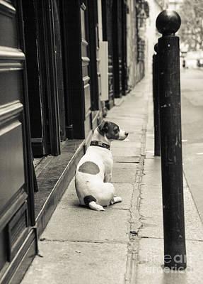 Dog In Paris Poster by Diane Diederich