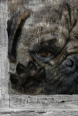 Dog In The Window Poster by Jack Zulli