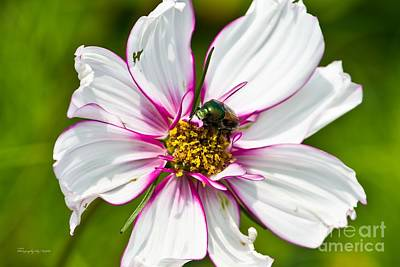 Dogbane Beetle Eating Flower Poster by Ms Judi