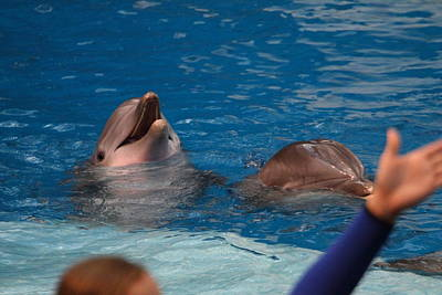 Dolphin Show - National Aquarium In Baltimore Md - 1212181 Poster by DC Photographer