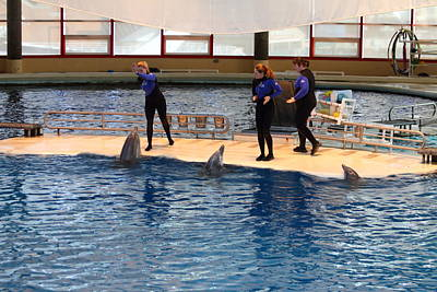 Dolphin Show - National Aquarium In Baltimore Md - 121225 Poster by DC Photographer
