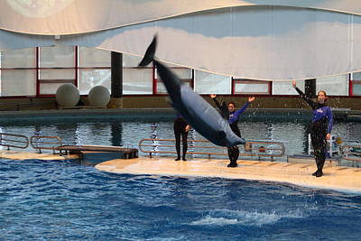 Dolphin Show - National Aquarium In Baltimore Md - 1212275 Poster by DC Photographer