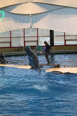 Dolphin Show - National Aquarium In Baltimore Md - 121269 Poster by DC Photographer