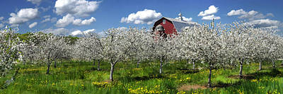 Door County Cherry Blossoms Panorama Poster by Christopher Arndt