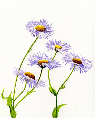 Douglas Aster Wild Flower Poster by Sharon Freeman