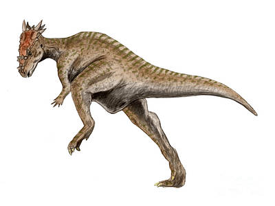 Dracorex Dinosaur Poster by Nobumichi Tamura
